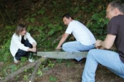 Sciage manuel du bois en forêt