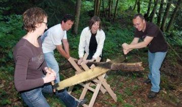 Sciage du bois en forêt